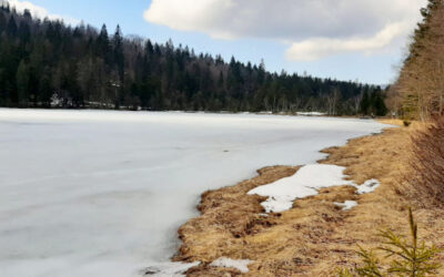 Bergwald Erlebnispfad Frillensee